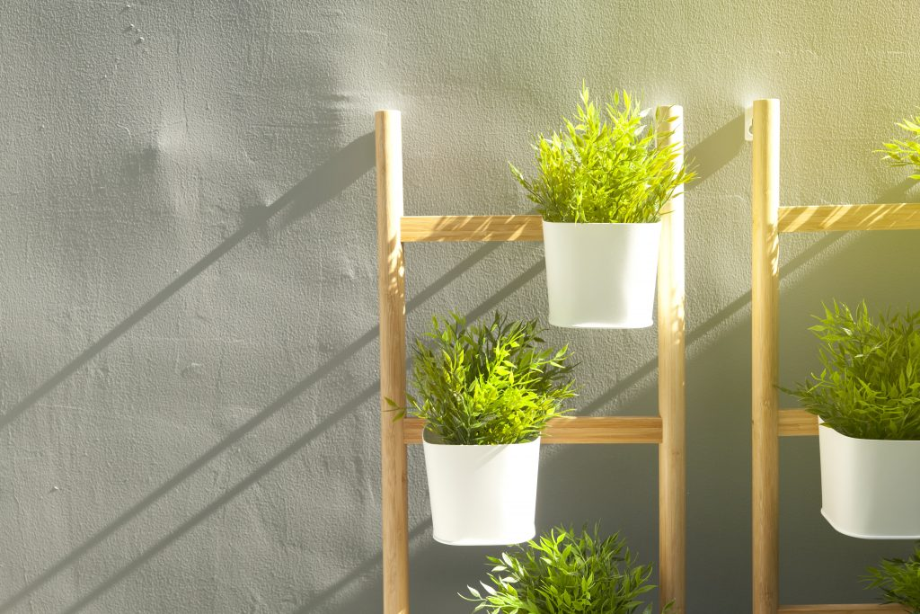 Φυτά σε σκάλα