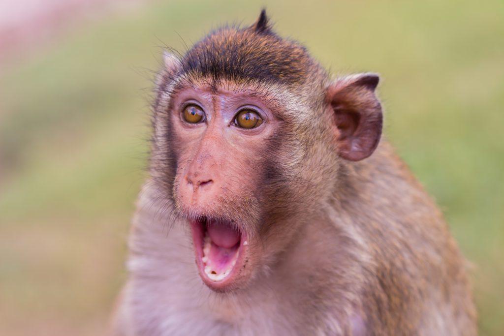 Neuralink: μαϊμού παίζει Pong