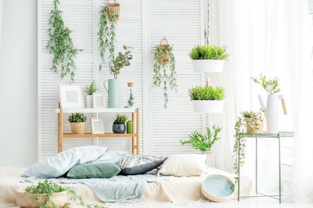 Βιοφιλία - Φυτά στο δωμάτιο