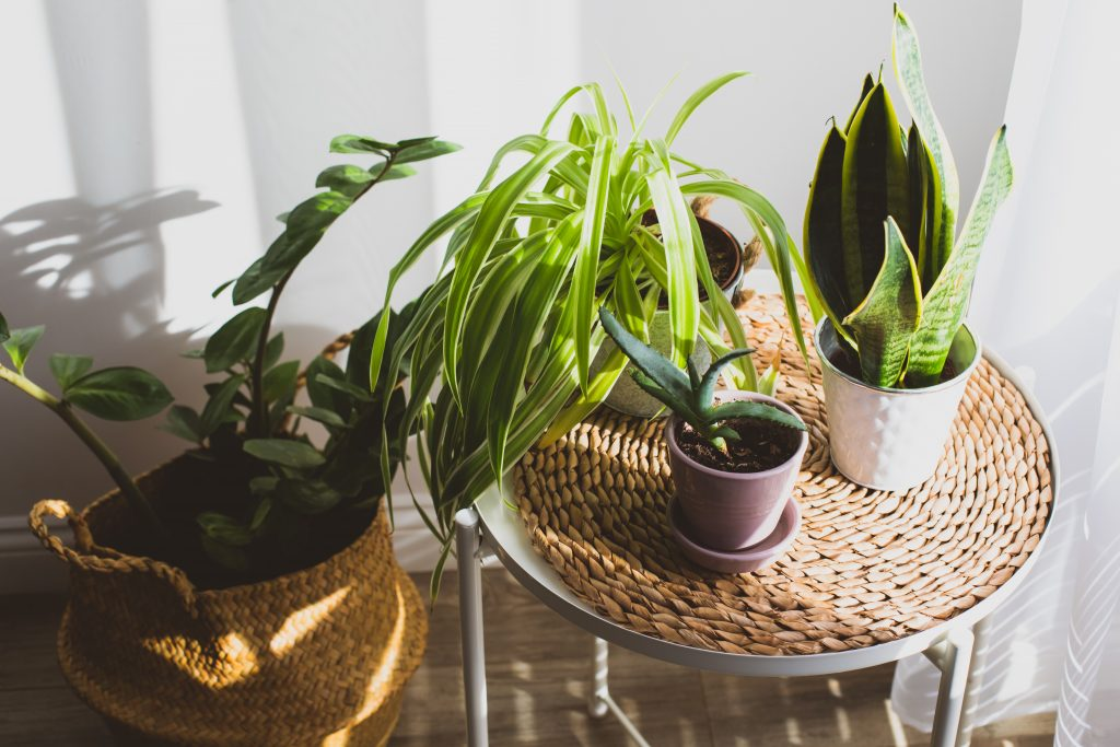 Βιοφιλία - Φυτά στο σπίτι