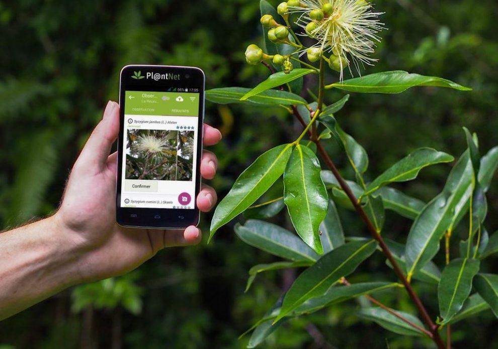 PlantNet εφαρμογή