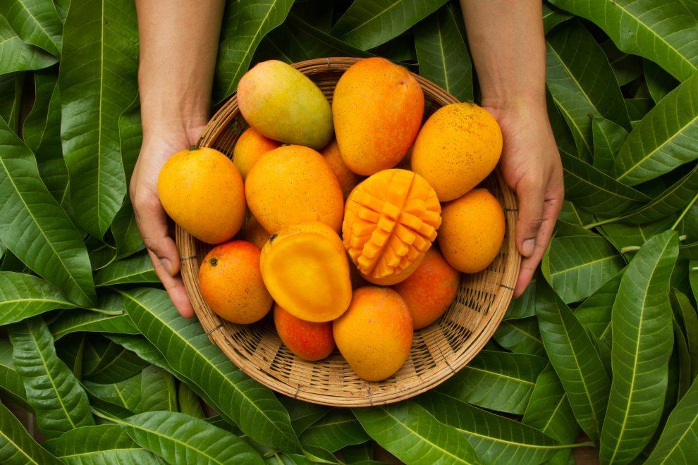 Φρούτο μάνγκο